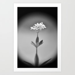 Flower No.14 Art Print