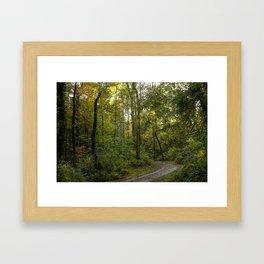 Walk In The Woodds Framed Art Print