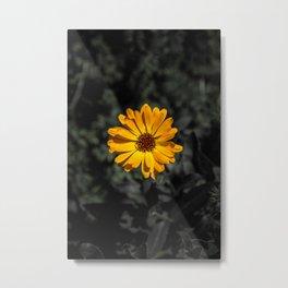 Selective Colour Metal Print