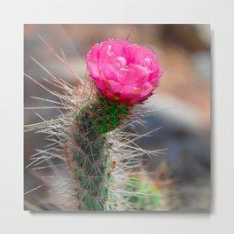 Blooming Cactus Metal Print