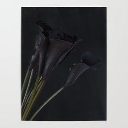 Dark Calla Lilies Poster
