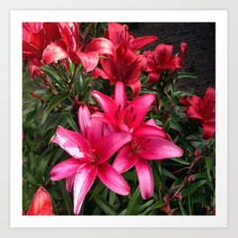 Lillies 3 Art Print