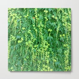 Wall of Cascading Green Leaves Metal Print