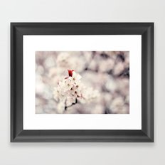 Cherry Blossoms  Framed Art Print