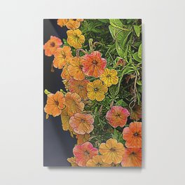 nasturtium in the garden Metal Print
