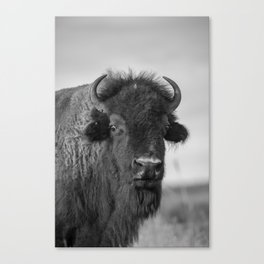 Buffalo Stance - Bison Portrait in Black and White Canvas Print