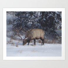 Bow river Elk Art Print
