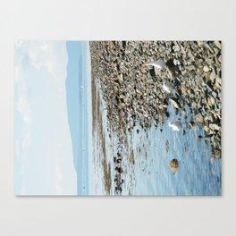 Seagull Landscape Canvas Print