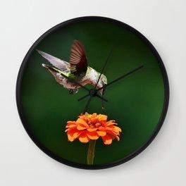 Hummingbird Bullseye Wall Clock