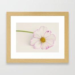 Sensation Cosmos Single Bloom Framed Art Print