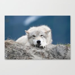 Sleepy Wolf Canvas Print