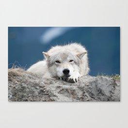 Sleepy Wolf Canvas Print