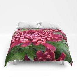 Red chrysanthemum Comforters