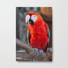 Living Treasures Animal Park - Parrot Metal Print