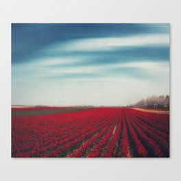 Field of Red Tulips Canvas Print
