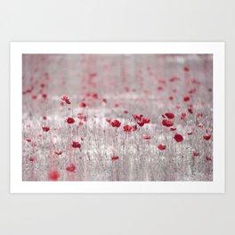 Poppies in Roma Art Print