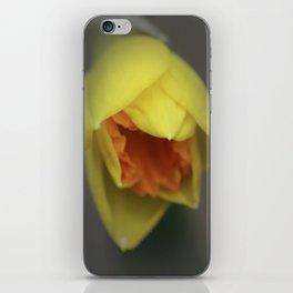 Easter Daffodil iPhone Skin