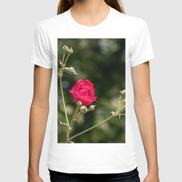 Lovely red rose on bokeh background T-shirt