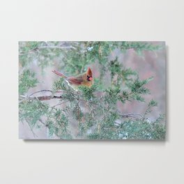 Pretty Female Cardinal Metal Print
