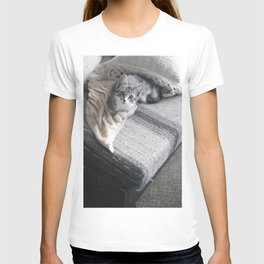 Our kitty on Quebec St. 03 T-shirt