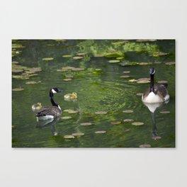 family of birds Canvas Print