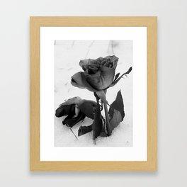 Rose in the Snow Framed Art Print