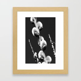 catkins from nature in black and white Framed Art Print