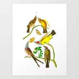 Vintage Scientific Bird Butterfly & Floral Illustration Art Print