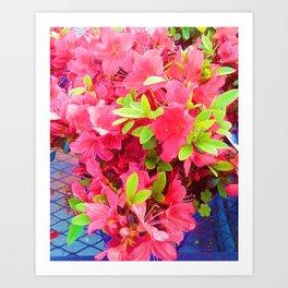 Sweet Fuchsia   Art Print