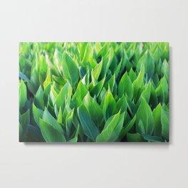 Green leaves so beautiful. Metal Print