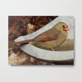 Pretty bird bather Metal Print
