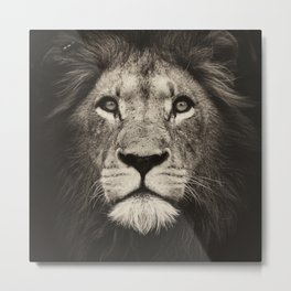 Portrait of a lion king - monochrome photography illustration Metal Print