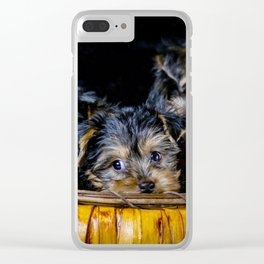 Halloween Pumpkin Basket Filled with Five Yorkshire Terrier Puppies Clear iPhone Case