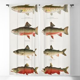 Illustrated North American Freshwater Trout Game Fish Identification Chart Blackout Curtain