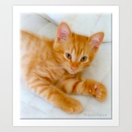 Quo - Kitten Photography By Giada Rossi Art Print