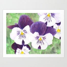 Pansies flowers Art Print