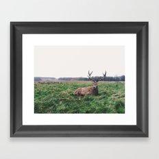 Deer #landscape Framed Art Print