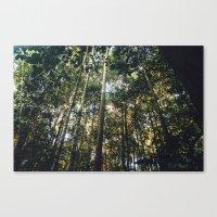 Bornean Jungle Canvas Print