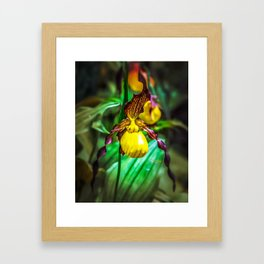Yellow Lady's Slipper in Itasca State Park Framed Art Print