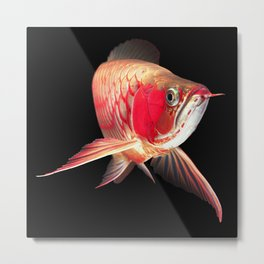 Super red arowana_Black background Metal Print