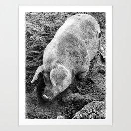 That's One Big Pig Black & White Art Print