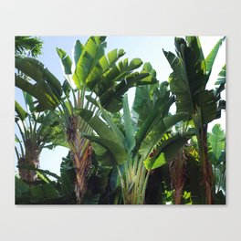 Tropical Forest / Nature Photography Canvas Print