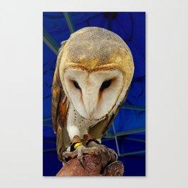 Mr. Owl the Barn Owl Canvas Print
