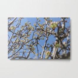 Branch Beauty Metal Print