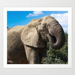 african elphant Art Print