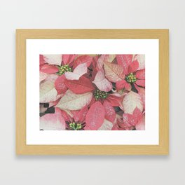 Poinsettia Bushel Pattern Framed Art Print
