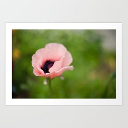 Peachy poppy Art Print