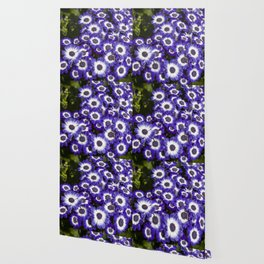 Cineraria Purple Wallpaper