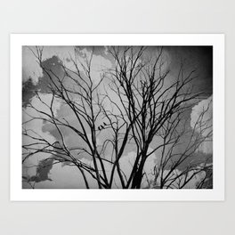 Black and White Crows Black Birds in a Tree Bokah Rustic A275 Art Print