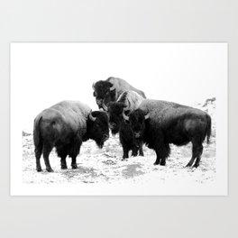 Bisons, buffalos Art Print